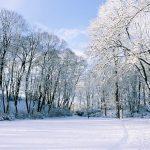 Vinterjacka i vinterlandskap